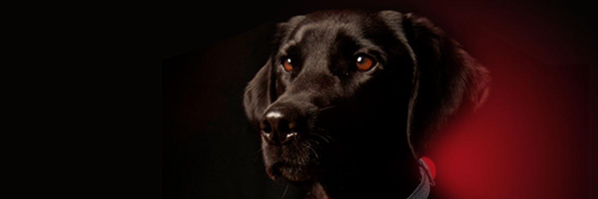 Uw hond mag gezien worden!