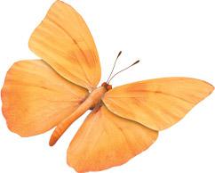 De Molen vlinder